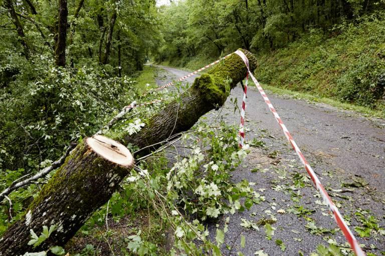 Sur les routes, les équipes du Département ont dégagé les arbres durant la nuit