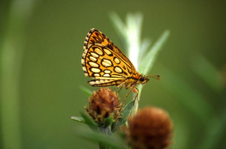 imagemiroir papillon.jpg